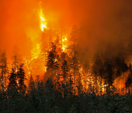 A forestf fire burning trees