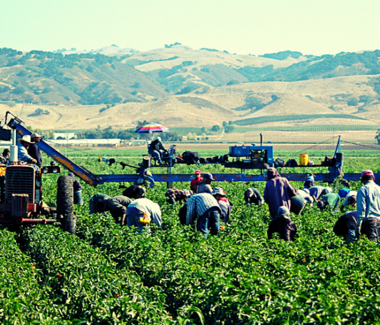 agricultural workers in a field